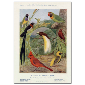 Art Print #61 - Values in Foreign Birds