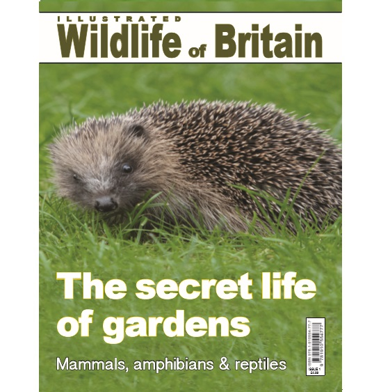 Illustrated Wildlife of Britain - Issue 1