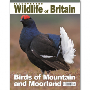 Illustrated Wildlife of Britain - Issue 2
