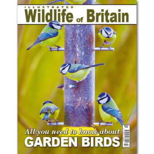Illustrated Wildlife of Britain - Issue 3