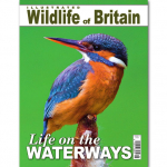 Illustrated Wildlife of Britain - Issue 4