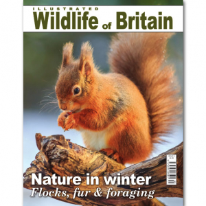 Illustrated Wildlife of Britain - Issue 5