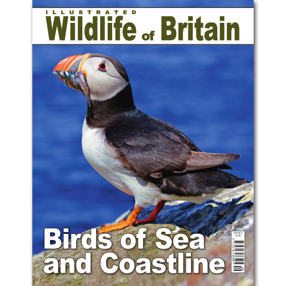 Illustrated Wildlife of Britain - Issue 6