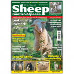 Practical Sheep, Goats And Alpacas